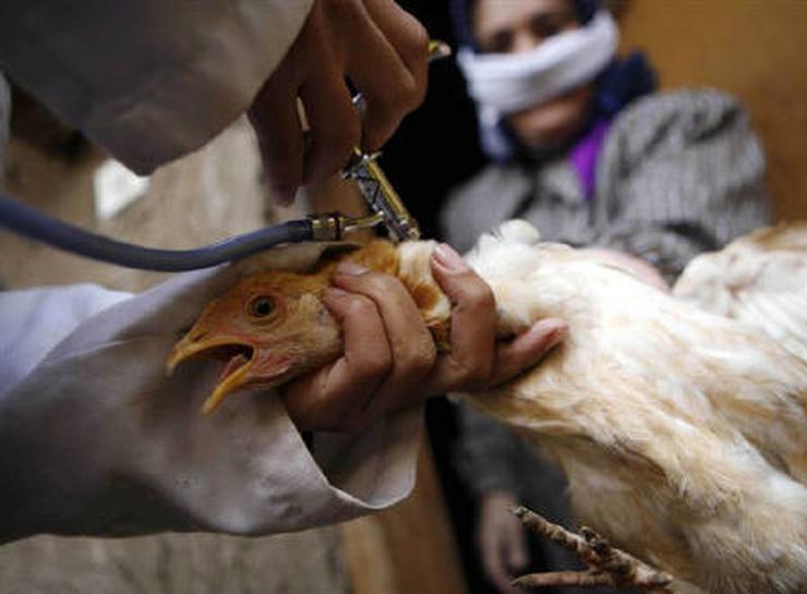 Hướng dẫn quy trình phòng bệnh cho gà vịt mang lại năng suất cao